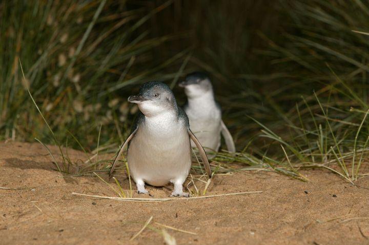 Penguin 5.jpg