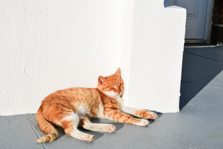 altana suites resident cat.jpg