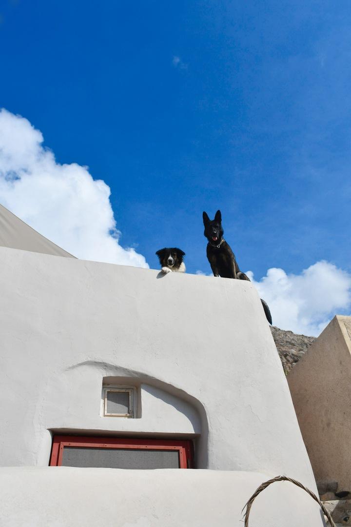 emporio cave villa dog.jpg