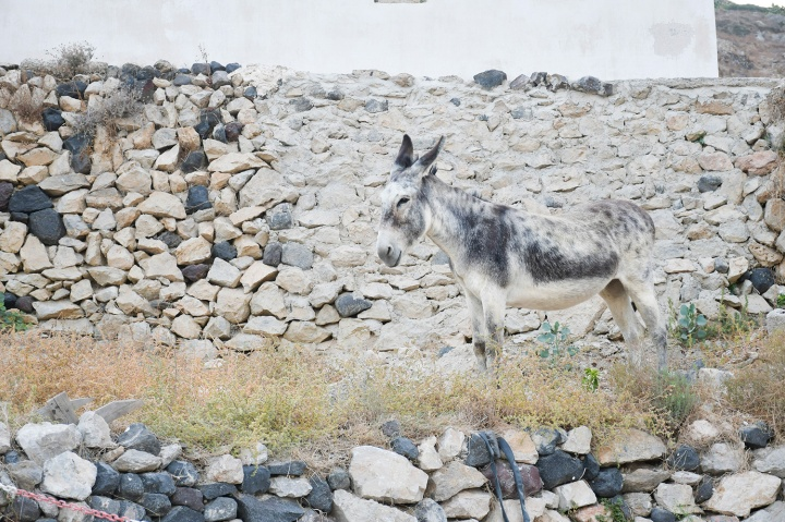 emporio village donkey_.jpg